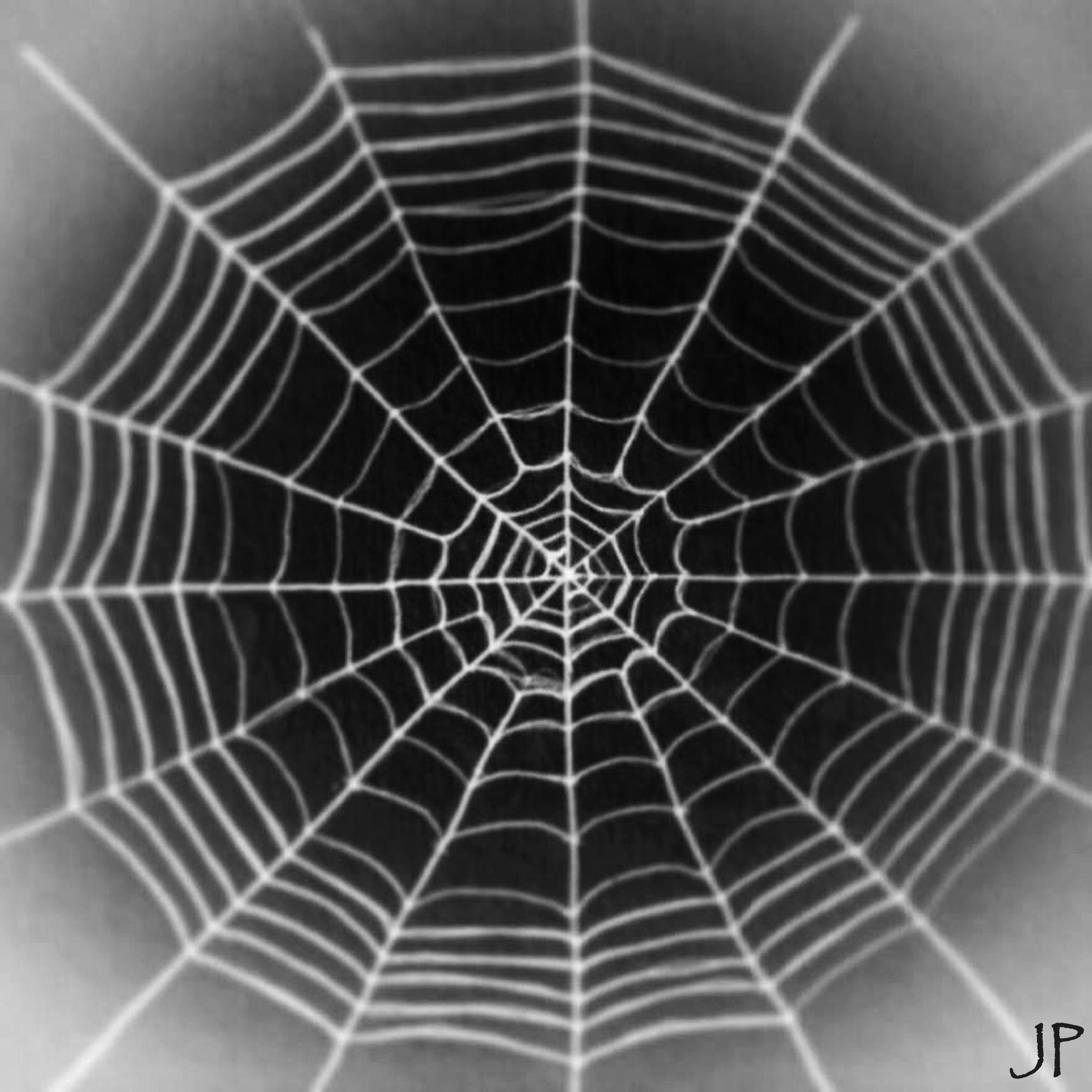 Spider Web Halloween Decorations: BWScience